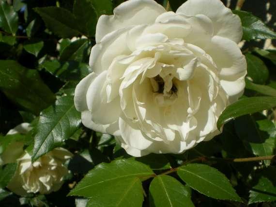 Les fleurs de mon jardin Le_19_19