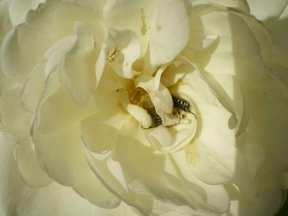 Les fleurs de mon jardin Le_19_20
