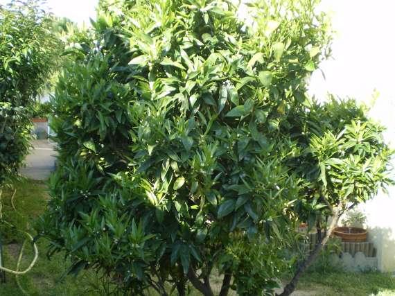 floraisons des arbres et des arbustes - Page 3 Le_19_25