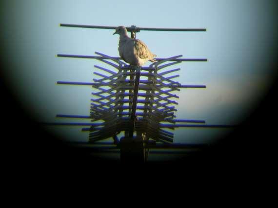 Oiseaux de printemps Tourte10