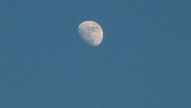 Ce soir! Nouvelle éclipse de Lune! P1010810