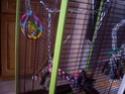 premier jouet pour mon loriquet Jouet_11
