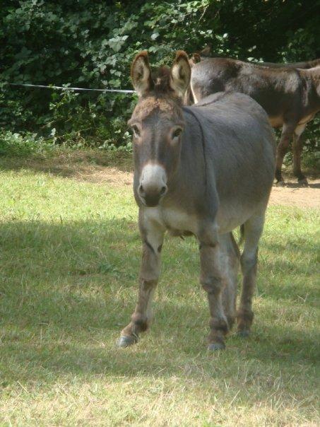 Mes ânes et mules ! N1365711
