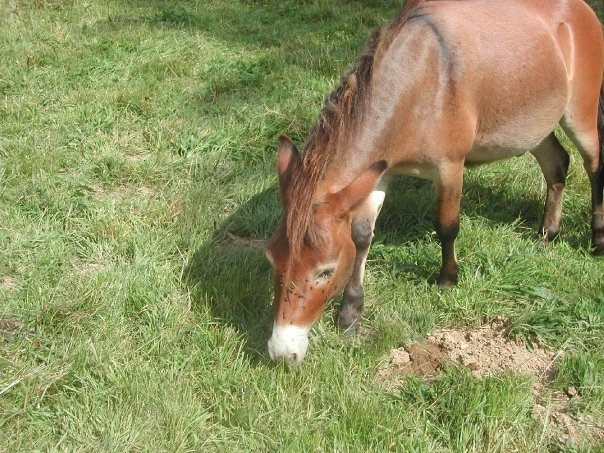 Mes ânes et mules ! N1365714