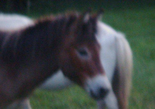 Mes ânes et mules ! N1365715