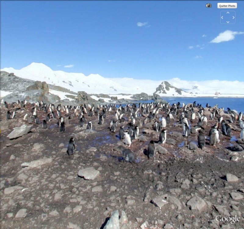 STREET VIEW : Les animaux - Page 4 Pingou11