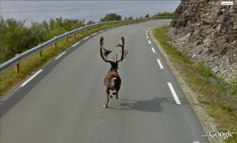STREET VIEW : Les animaux - Page 5 Ranne10