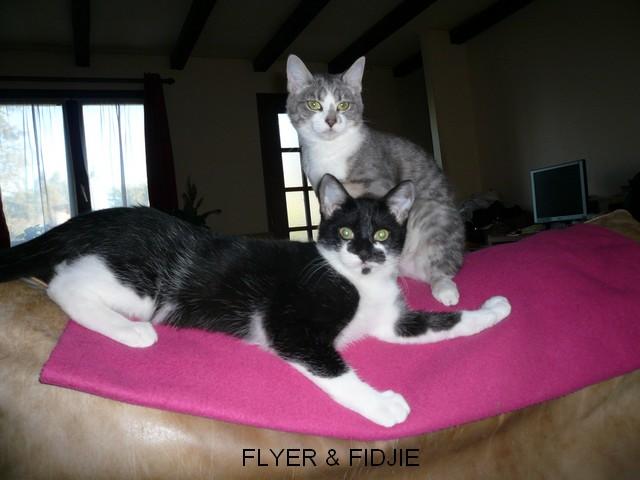 FLYER Fidji_12