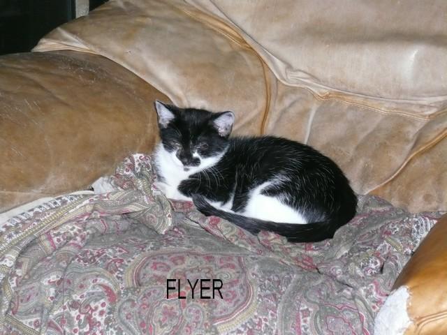 FLYER Flyer_10