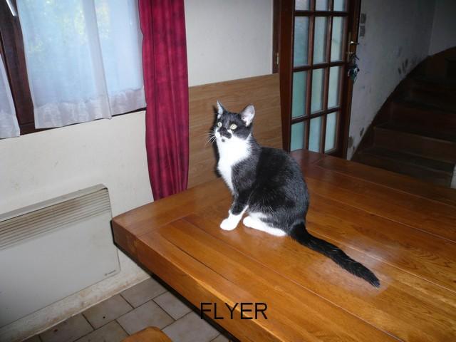 FLYER Flyer_11