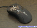 Raptor new mouse 1210
