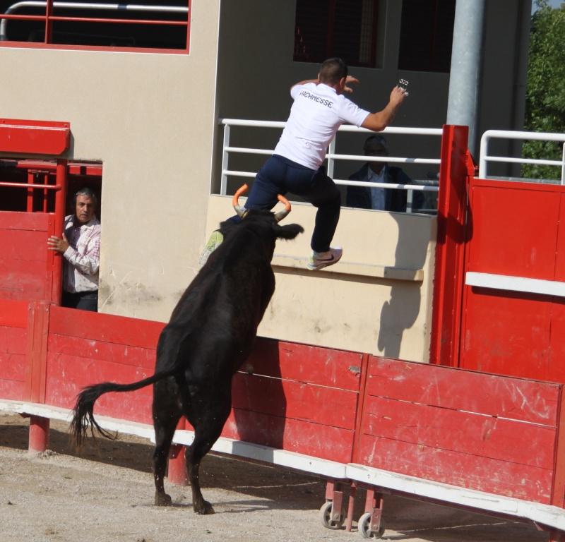 codognan course de vache emboullée de la manade blatiere avec l'ecole taurine Img_8010