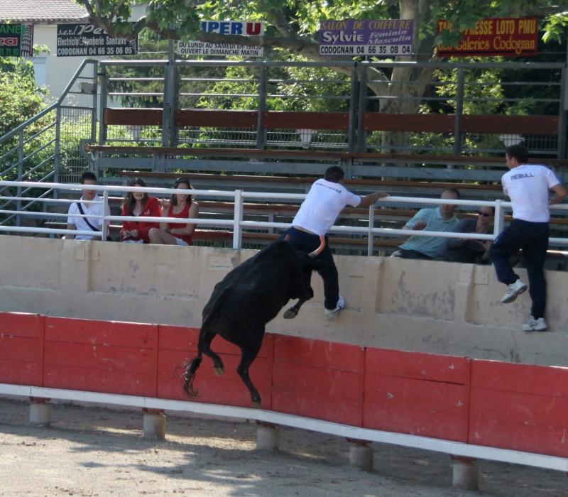 codognan course de vache emboullée de la manade blatiere avec l'ecole taurine Img_8012