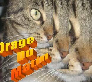 un nouveau forum arrive sur internet Images11