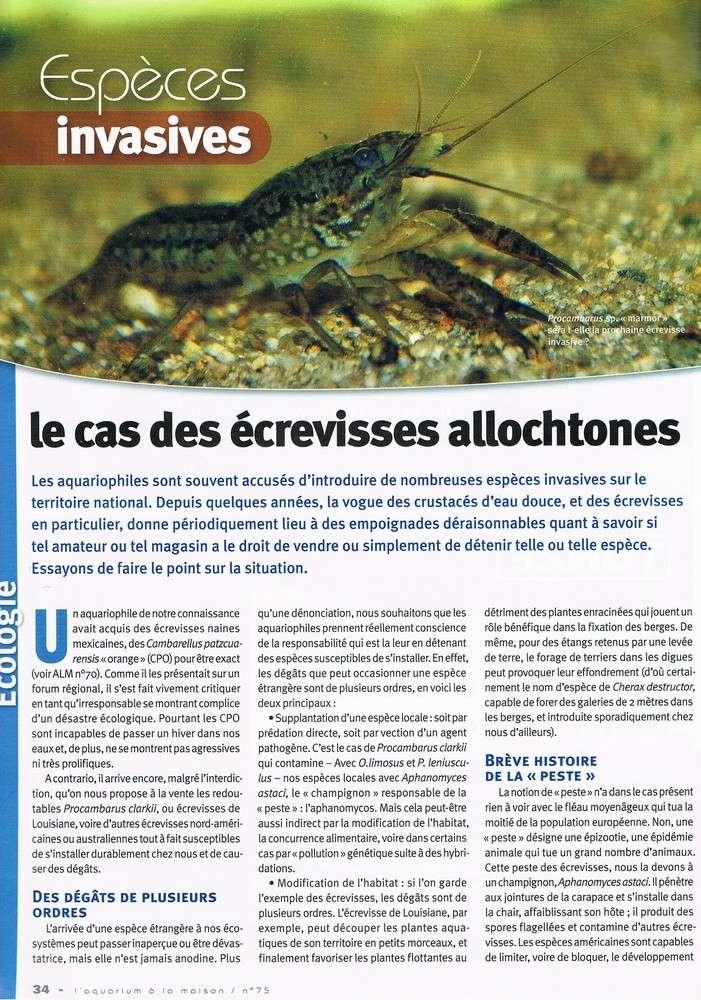 L'écrevisse Procambarus sp marmor doit on arrêter sa maintenance? 1_bmp110