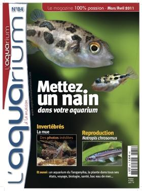 Magazine L'AQUARIUM : 2 sujets + divers sur Bettas Alm8411