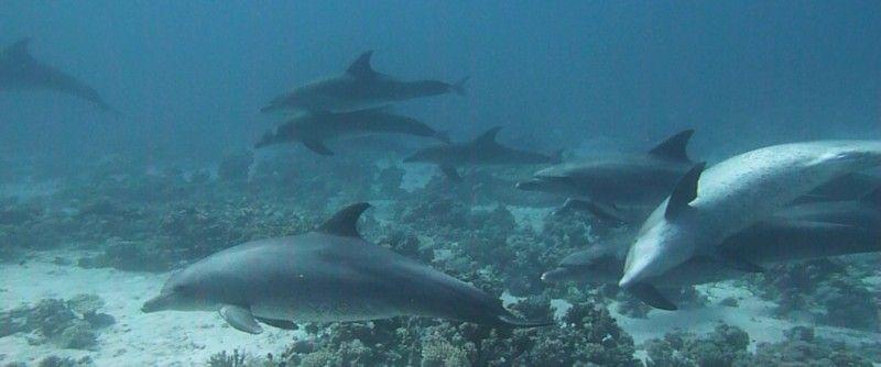 Danser avec les dauphins.. Dauphi12