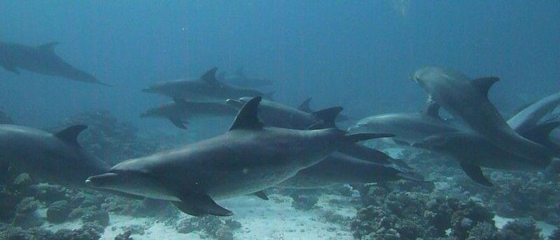 Danser avec les dauphins.. Dauphi13