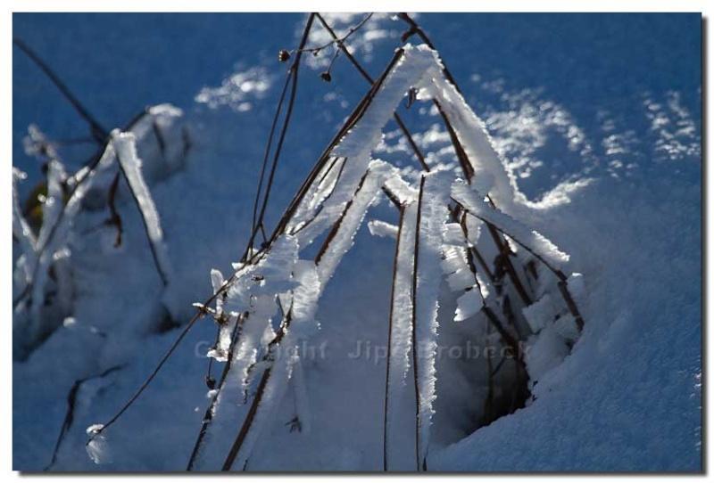 La première neige Img_8016
