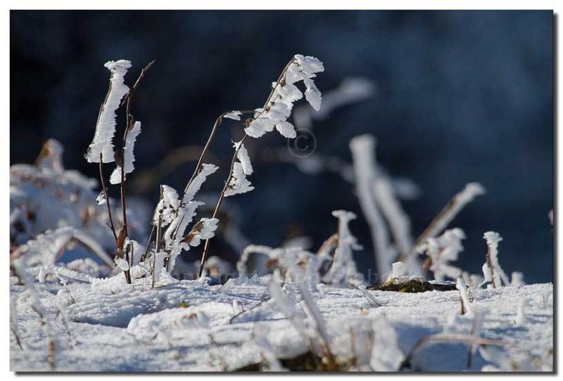 La première neige Img_8017