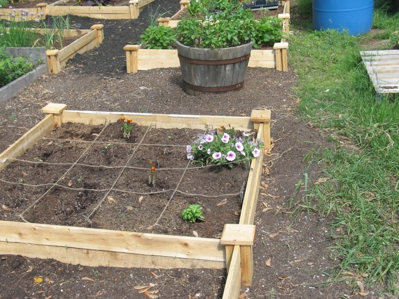 Home Depot Raised Bed photos/review Img_3111