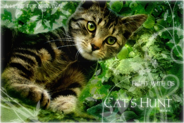 Cat's Hunt ~ Bann10