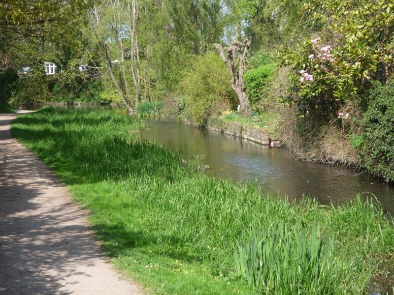 Aylesbury, Wendover, The arm of the canal that never was 00416