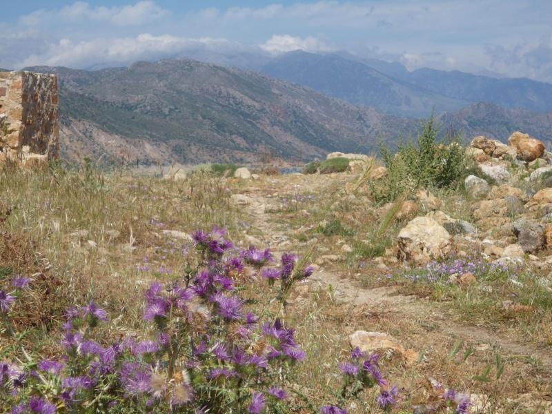 Greece, Island of Crete, Paleochora, 2011 04312