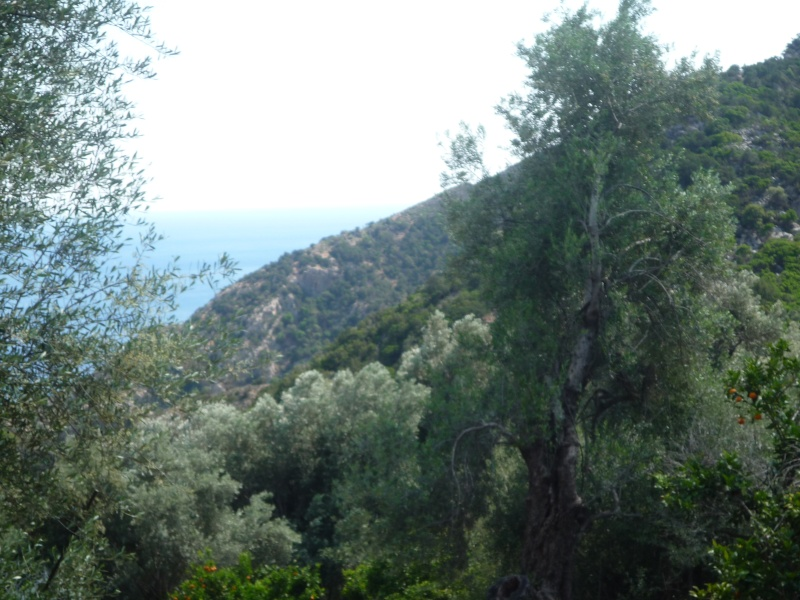Greece, Island of Crete, Paleochora, 2011 07010