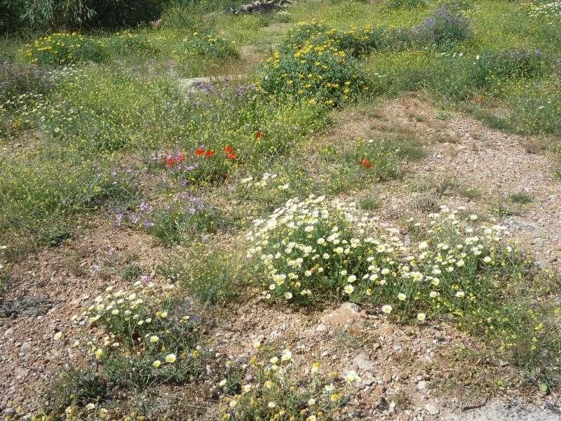 Greece, Island of Crete, Paleochora, 2011 12210