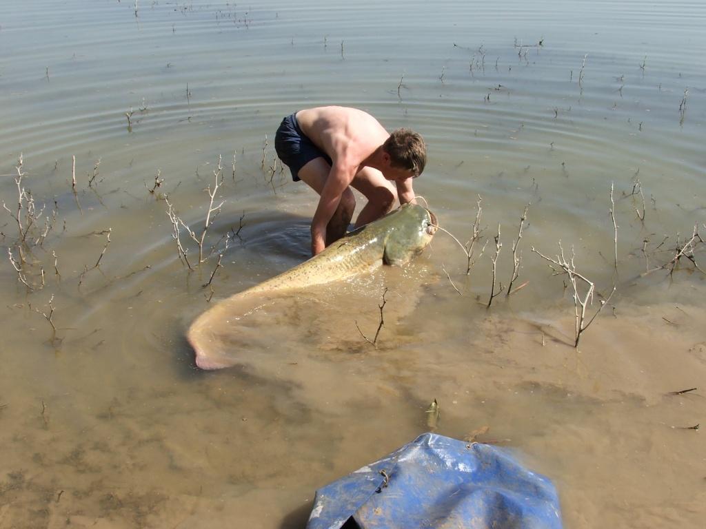 Spain, Caspe, A Catfishing Holiday on the River Ebro Catfis21