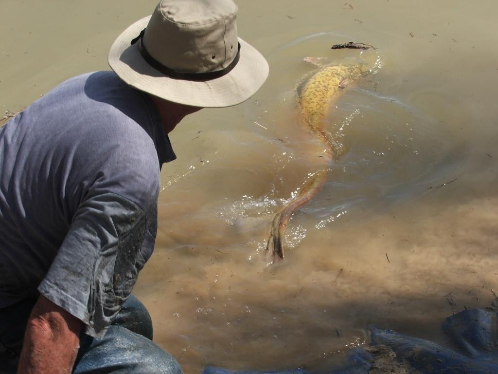 Spain, Caspe, A Catfishing Holiday on the River Ebro Catfis22