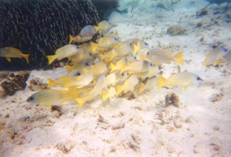 Maldives, Hukuraa Club Img26310