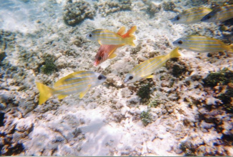 Maldives, Hukuraa Club Img26410