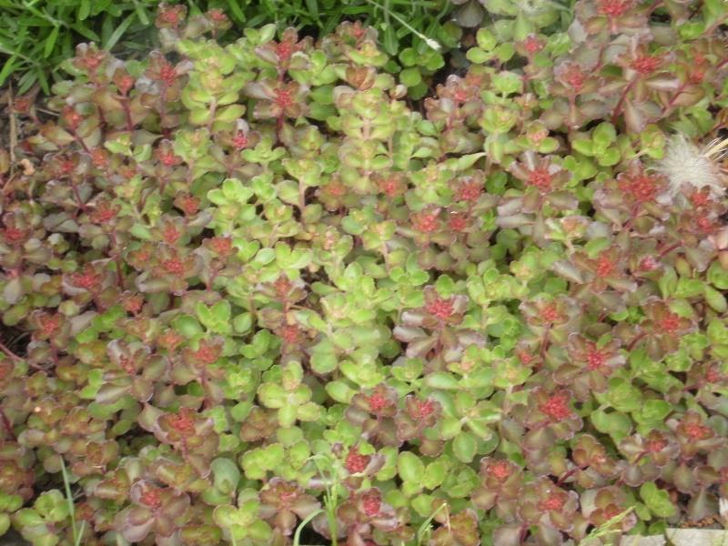 Floraisons du mois de juin P5190012