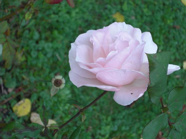 Le jardin de ma tante Cimg7013