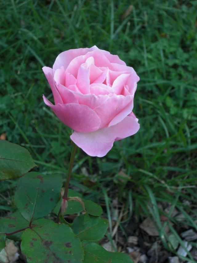Le jardin de ma tante Cimg7014