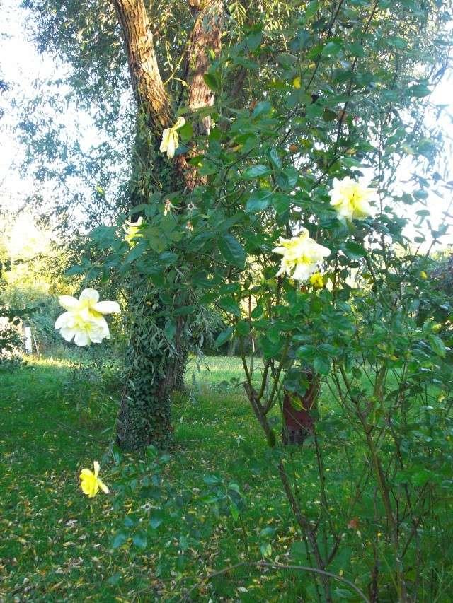 Le jardin de ma tante Cimg7016