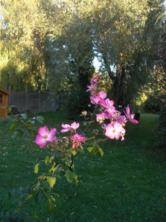 Le jardin de ma tante Cimg7017