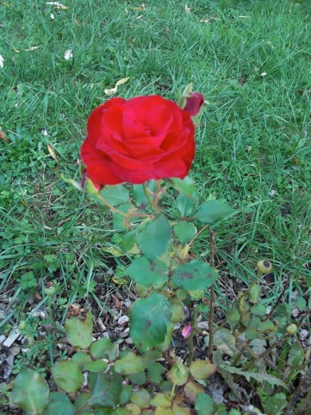 Le jardin de ma tante Cimg7019