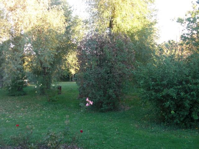 Le jardin de ma tante Cimg7021