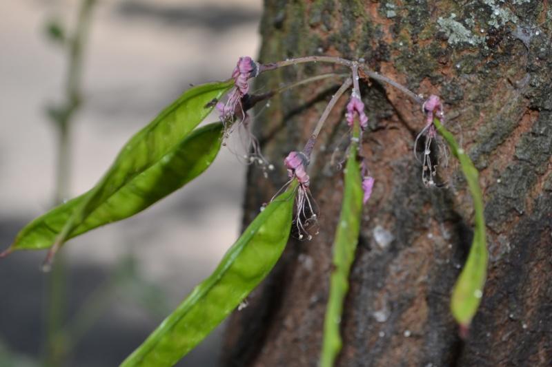Deux arbres en un, curiosité de la nature Dsc_0220
