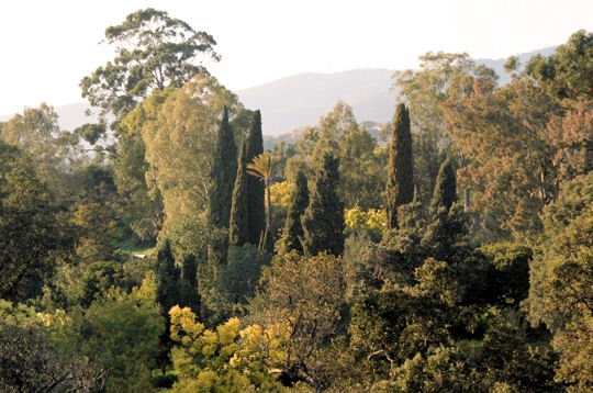 Quelques Jardins  Rayol_10