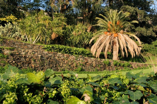 Quelques Jardins  Rayol_11