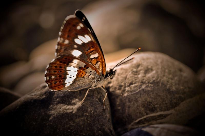 FIL ROUGE : Papillons Story Petit_11