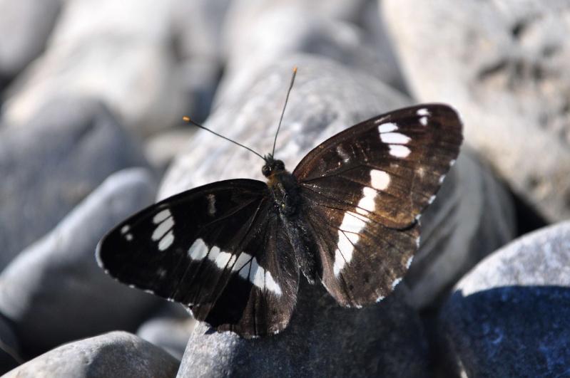 FIL ROUGE : Papillons Story Petit_12