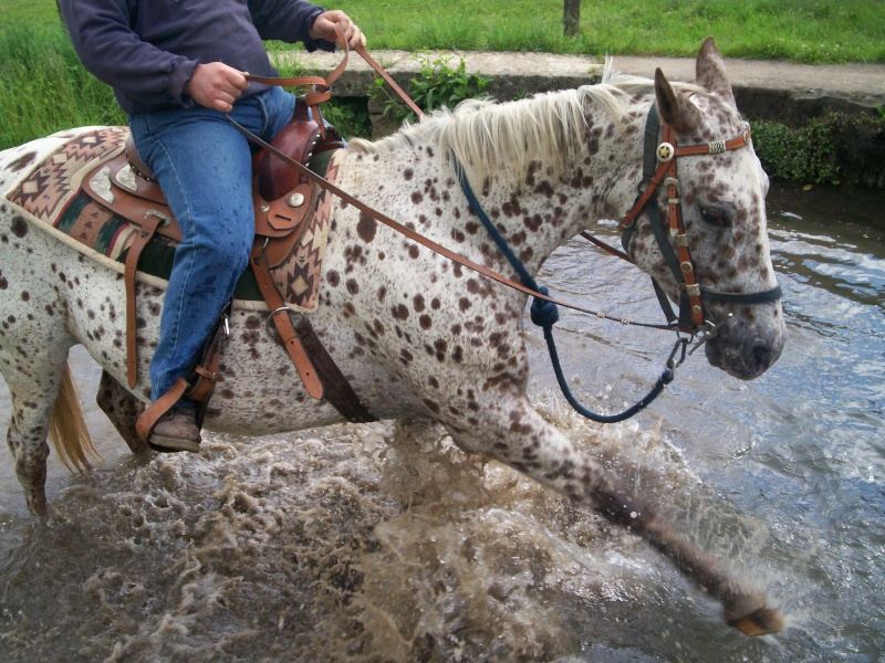 Les chevaux et l'eau, venez votez... Balade21