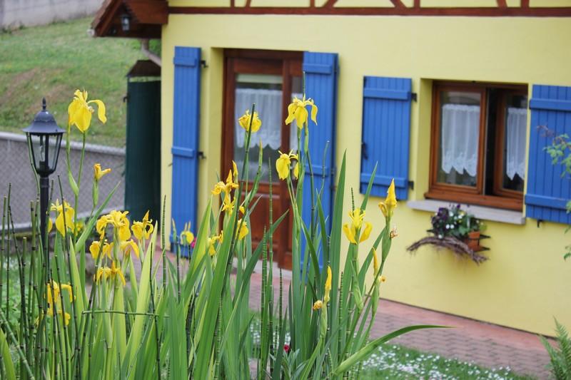"""Les iris du """"Gîte en Alsace"""" Img_1412"""