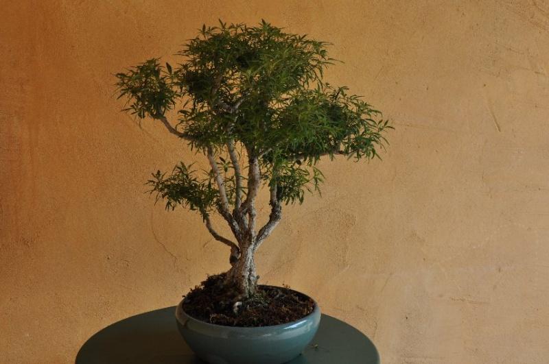 Un joli bonsaï pour Papy - Page 2 Juin_228