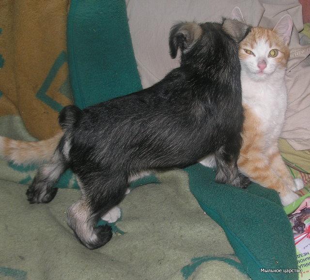 Наши любимые животные - Страница 2 Dnnzn_10